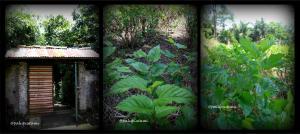 gerbang menuju lahan murbey - tanaman murbey